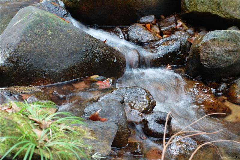 四色林徑旁的河溪