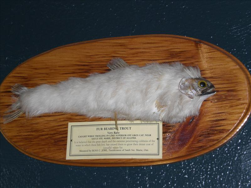 The first furry fish we've ever seen