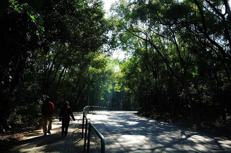 大棠山道 Tao Tong Shan Road