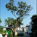 海下村口起步 Start at Hoi Ha Village