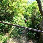龍蝦灣郊遊徑口轉右抄小路落餓死雞橫山徑