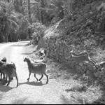 Tafraoute & Ait Mansour Oasis