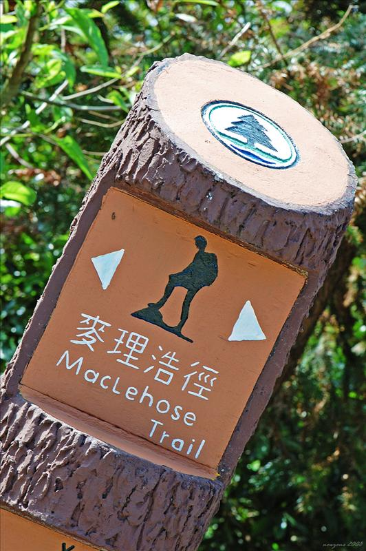 MacLehose Trail Stage 9 麥理浩徑