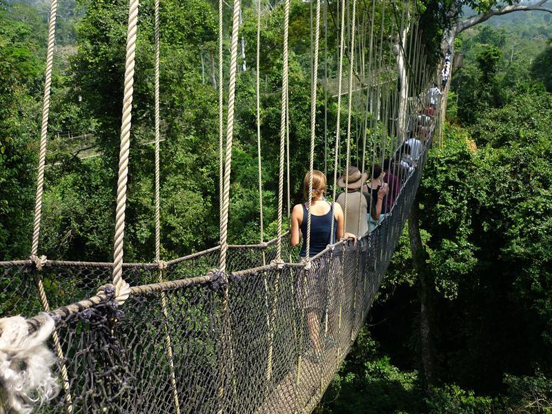Kakum Nationalpark - Regenwald von oben
