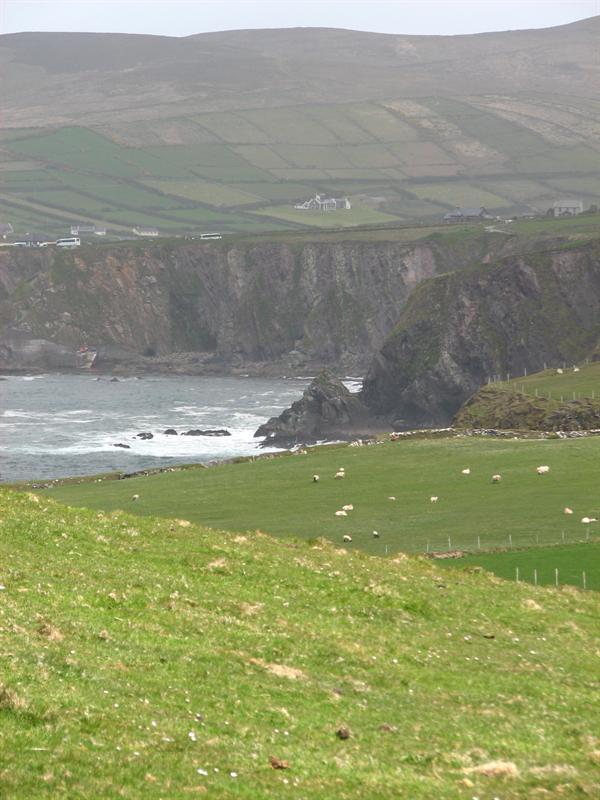Sheep+Cliffs+Green=Ireland