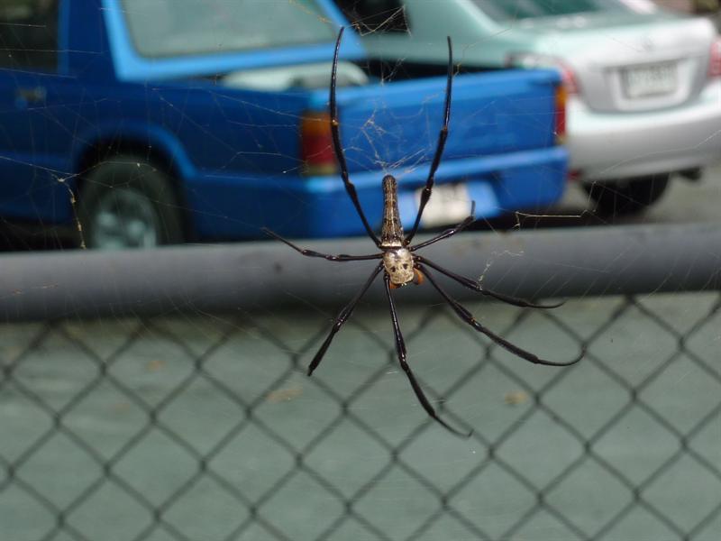 nice big spider