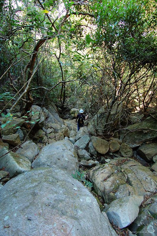 Pak Hok Stream 白鶴石澗藏於密林之內