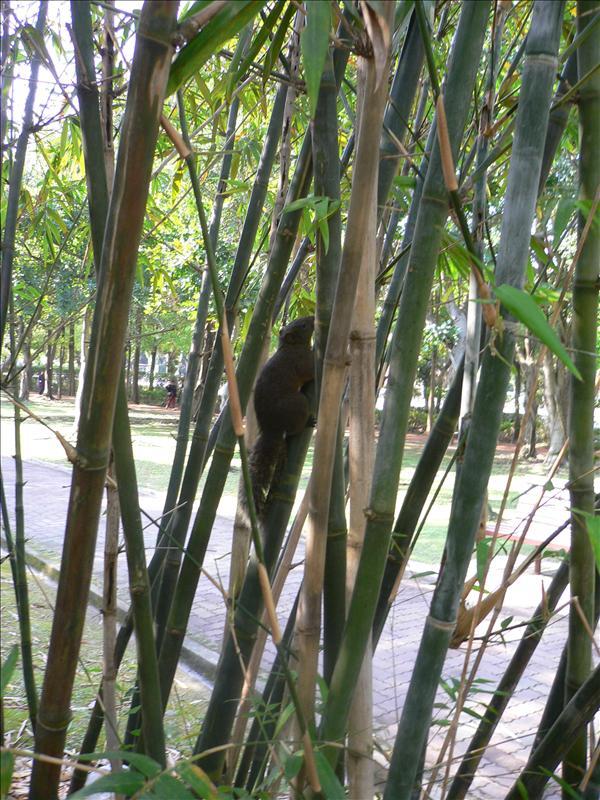 出發前先來看看大安公園的松鼠