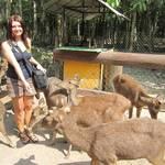 Sanktuarium dla zwierzat