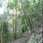 嵐亭往森林浴步道 (6).JPG