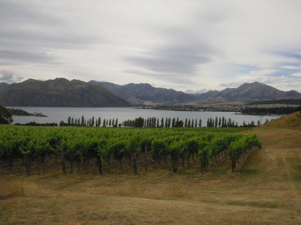 Wine tour in Wanaka