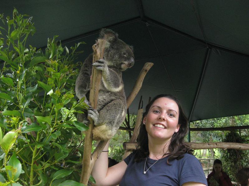 Patting koala's