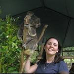 Patting koala