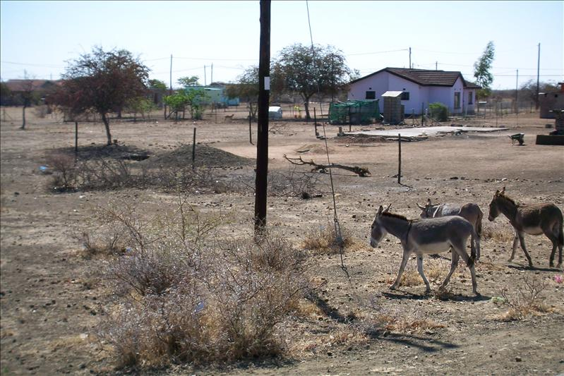 Donkeys on the road side / Anes au bord des routes