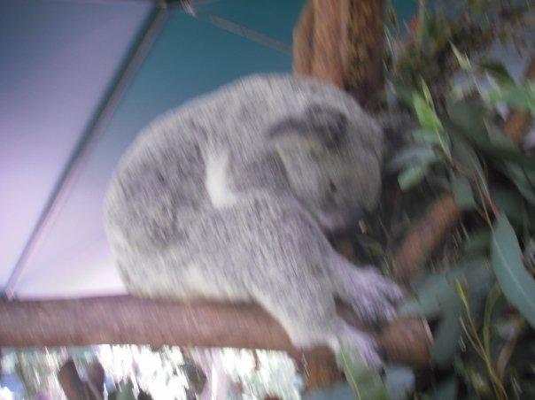 And we met some koalas!