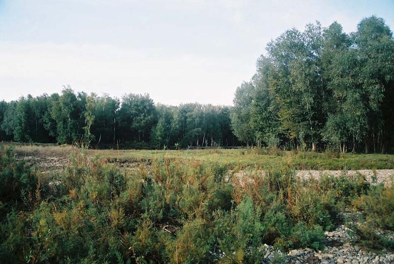 31哈巴河樺林公園1 (3).jpg