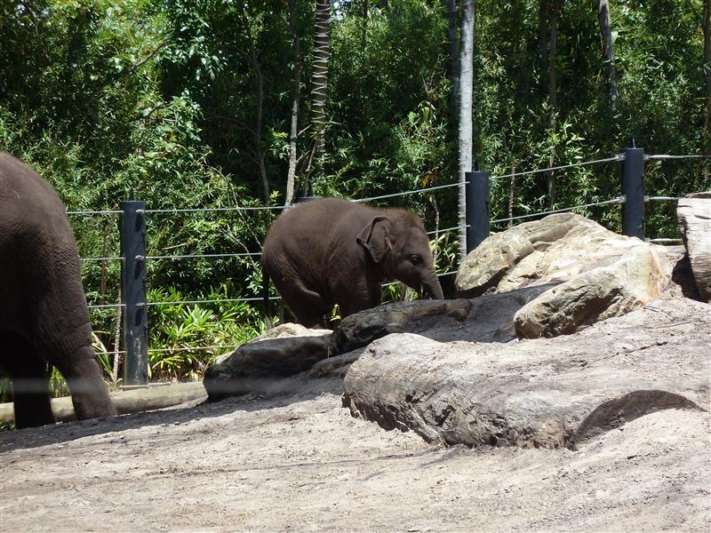 En af de 3 babyelefanter !