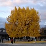Nishihonganji09,12,6 12.jpg