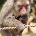 Tenryu:ji&Monkey Park