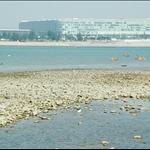 DSC_0010 東涌候王廟外的泥灘.jpg