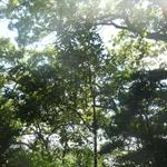 日吉的公園