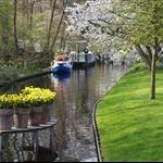 2011-Netherlands Keukenhoff-0009.jpg