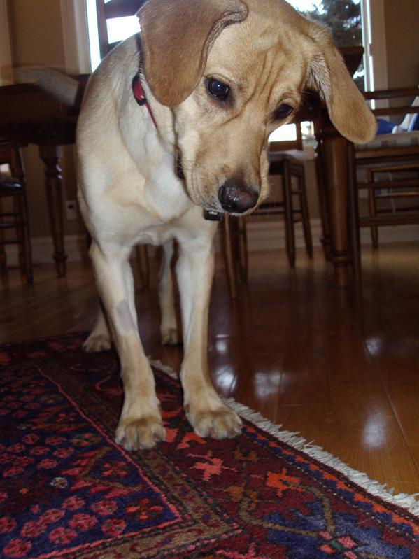Finn, der neue sturme Familienhund