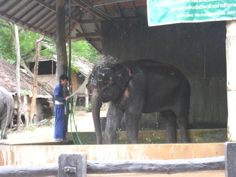 大象在洗澡澡~