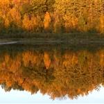 Lake, Fall 2008_ (5).jpg