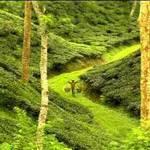Tourism Information – Sylhet, Bangladesh!