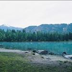 26喀納斯湖1 (8).jpg