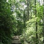 DSCN8582 原始森林.jpg