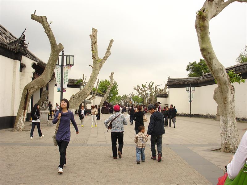 無葉的樹幹