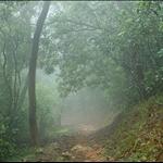 越黎越大霧