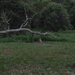 Townsville 021.JPG
