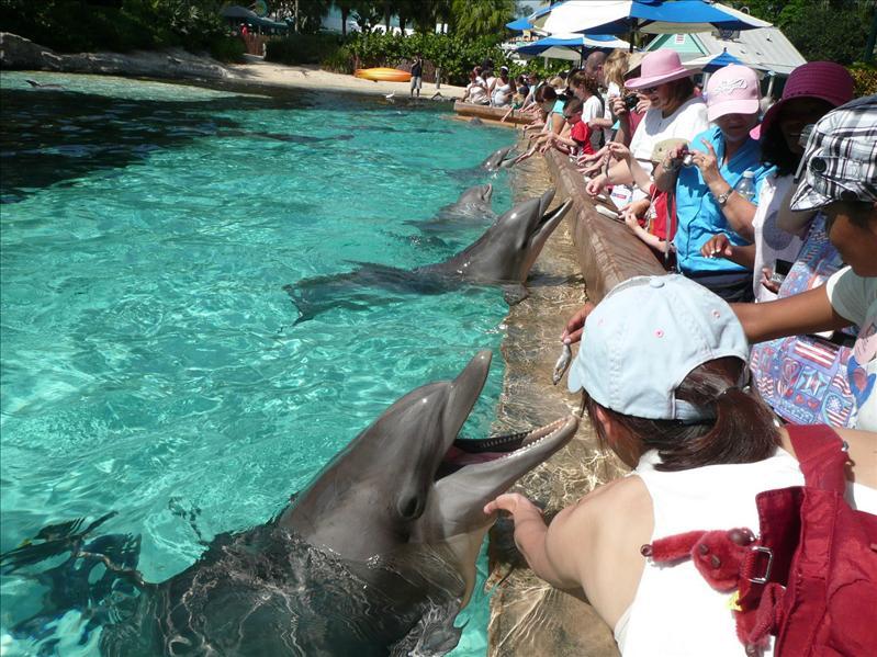 Sea World - Dolphin