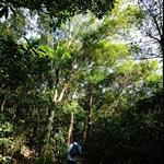 穿過一段叢林往雷打石山