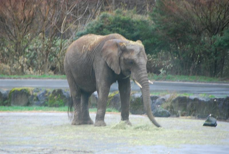 野生大象好多隻喔