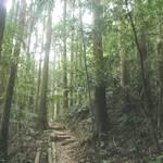 加里山 (29).JPG
