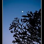 Moon sonata