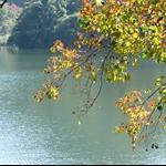 慈湖 (12).JPG