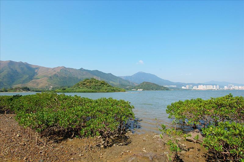遠眺深圳東岸的沙頭角鹽田港一帶