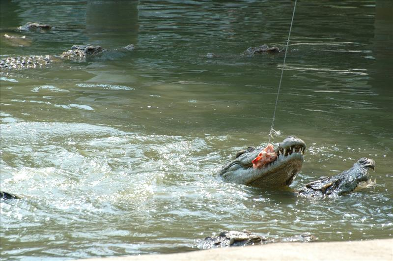 Crocodile Park 番禺鱷魚公園