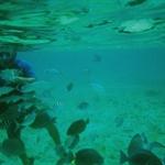 under water 10