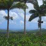 View towards Barbados