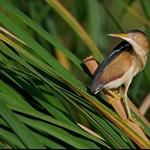 wildlife preserve range in kissimmee