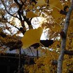 Nishihonganji09,12,6 06.jpg