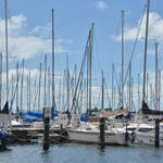 St Petersburg FL Races and Harbor 4-19-21-12 222.jpg