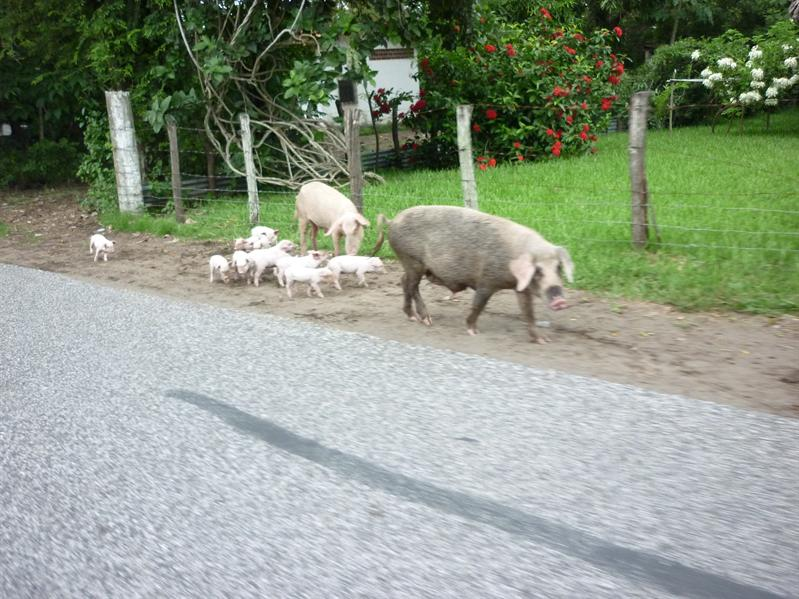 Just your average side of the road in Guatemala...S