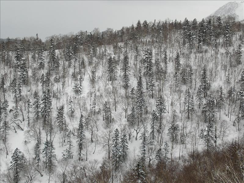 April Snow in Hokkaido